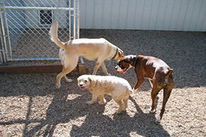 Sturgeon County Kennels